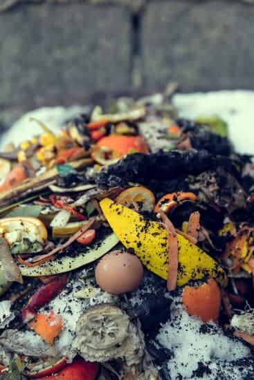 Lixo Orgânico de uma residência na compostagem doméstica