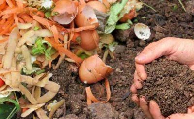 Lixo orgânico virando húmus