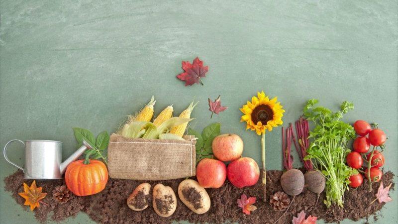 Horta em casa uma colheita